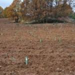 Día de Reforestación Toyota 2009 04